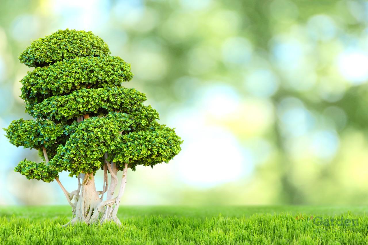 Bonsai garden arcobaleno ferrara for Piante da interno profumate