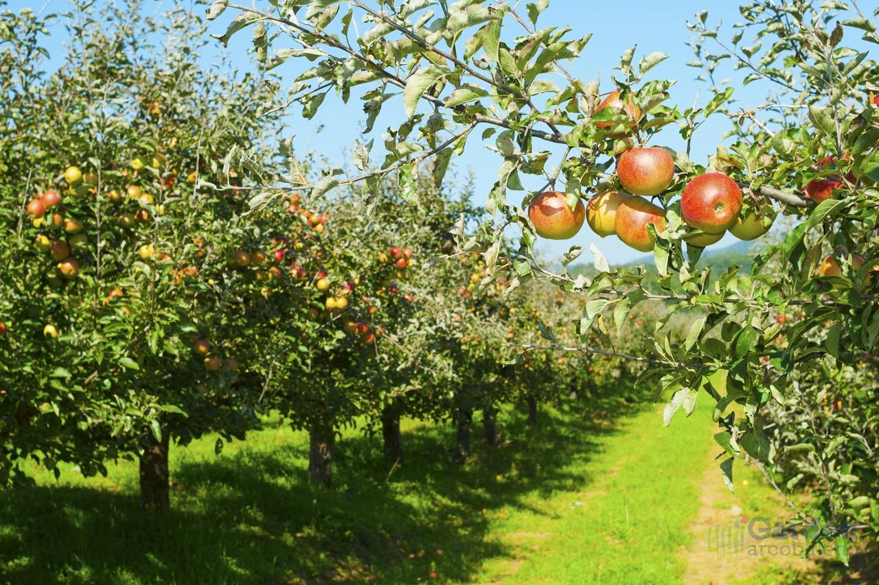 Piante da frutto garden arcobaleno ferrara for Piante da vivaio