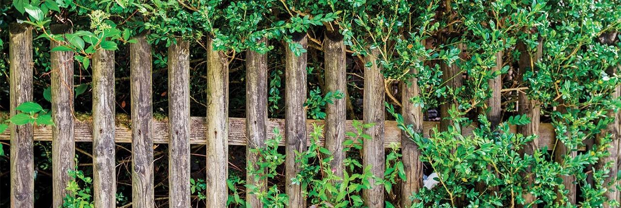 Piante da siepe garden arcobaleno ferrara for Piante da vivaio