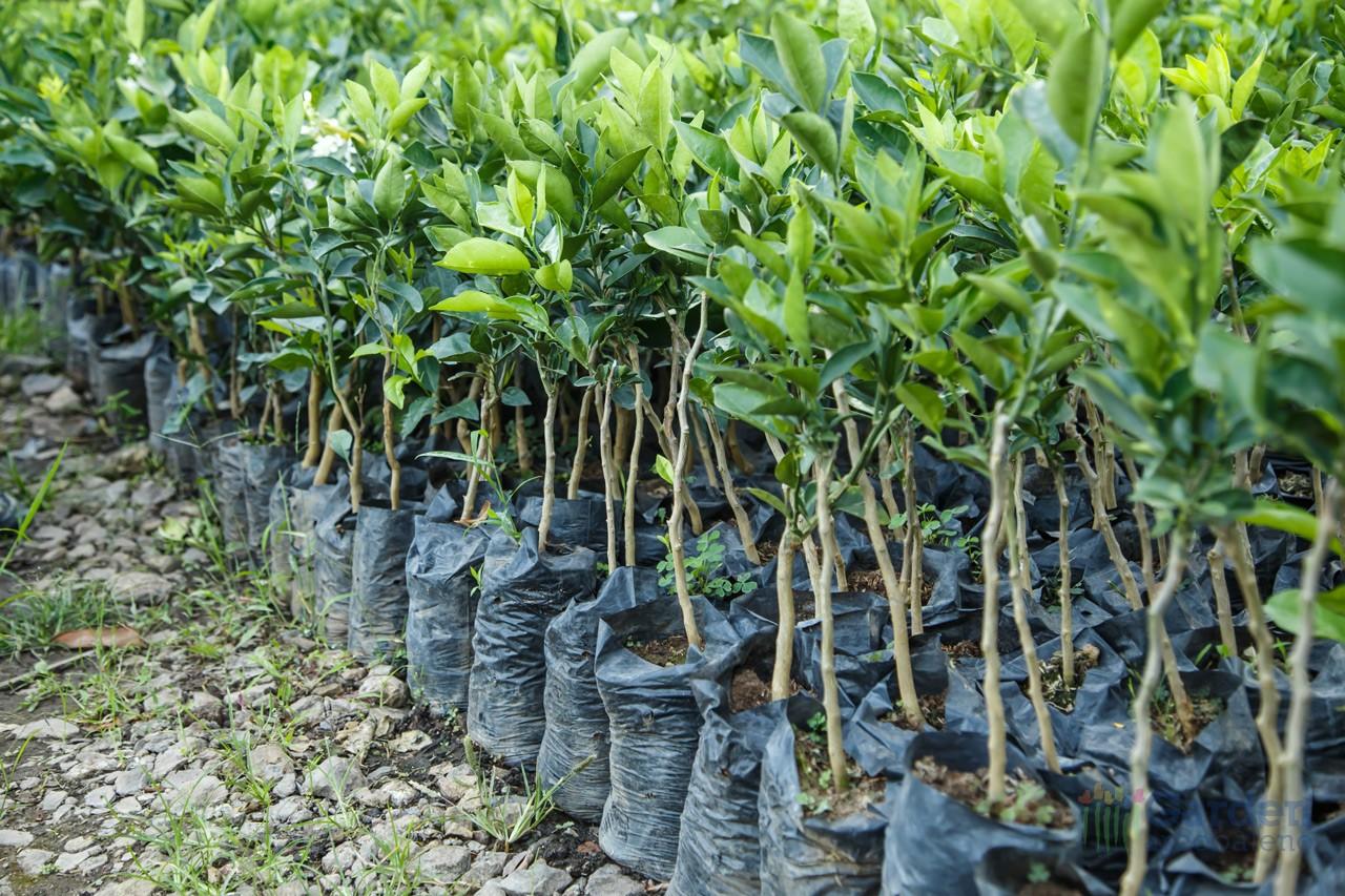 Piccoli alberi garden arcobaleno ferrara for Vivaio alberi