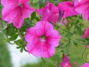 flowers-390114_1280