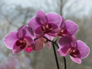 orchideae-1335301_1280
