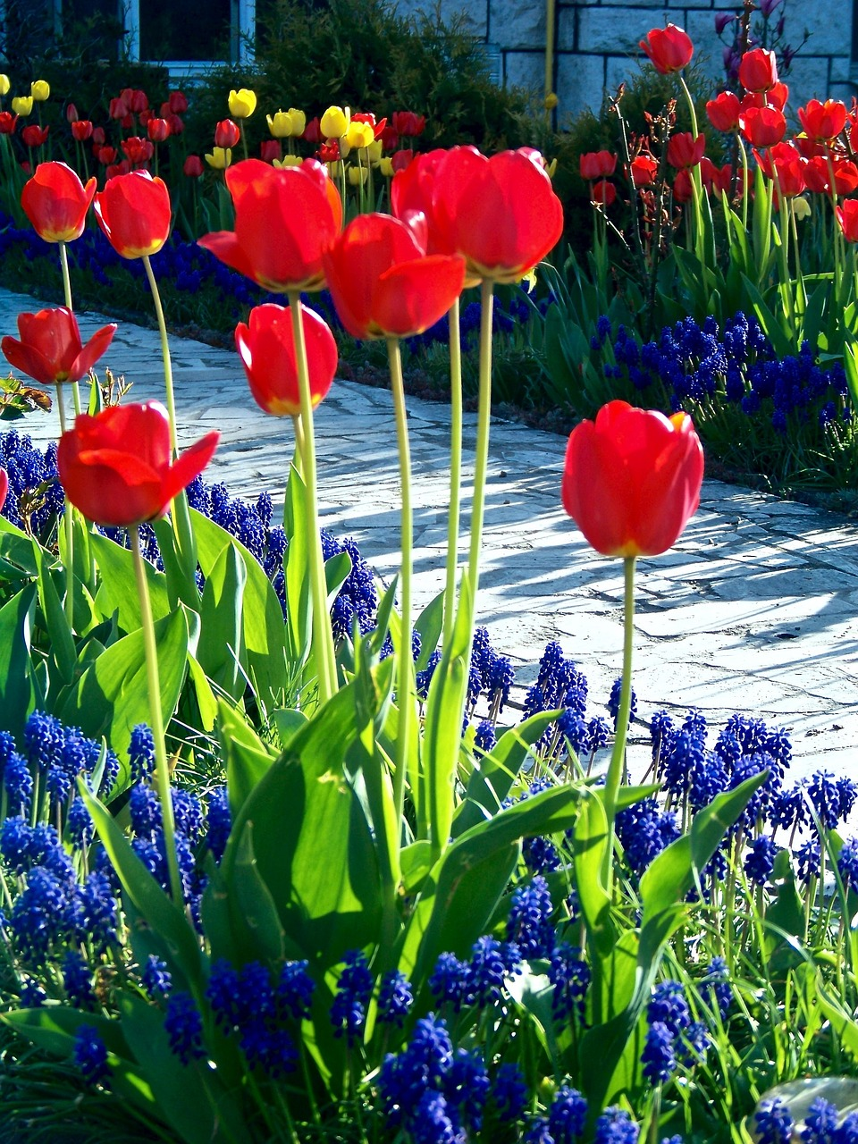 Quali Bulbi Piantare In Primavera bulbi: quali piantare per la primavera - garden arcobaleno